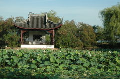 Ancient Pavilion overlooking field of waterlilies Royalty Free Stock Photos