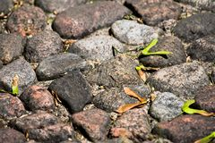 Ancient paving stones and maple seeds is close. Up Royalty Free Stock Image