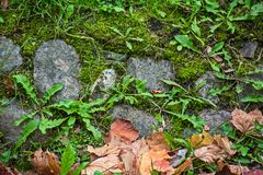 Ancient paving stones overgrown with grass and dry leaves stock image