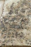 Ancient pebbled floor mosaic Stock Image