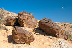 Ancient Petrified wood. The fossil is on the bottom of the crater Makhtesh Gadol, in the south of Israel, in the Negev desert. In the background, the sky, the Royalty Free Stock Image