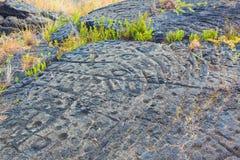 Ancient petroglyphs Stock Photography