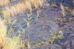 Ancient petroglyphs Stock Photos