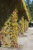 Ancient pillars with grapevine at Dutch graveyard Rusthof, Netherlands Stock Photo