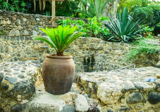 Ancient pitcher with palm on the monastery Mary Magdalene Stock Images