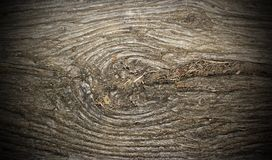 Ancient poplar wood with knot Stock Images