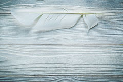 Ancient quill on wooden board horizontal image Stock Photos