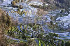 Ancient Rice Terraces. Close up views of ancient rice terraces in Yuanyang in southern Yunnan province in China Royalty Free Stock Images