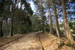 Ancient road in Medellin area Royalty Free Stock Images