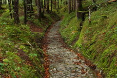 Ancient road through woods Stock Images