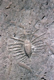 Ancient rock carving in Qatar Stock Image