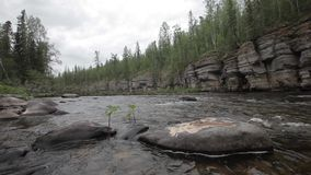 Ancient rocks deep in the taiga stock video footage