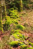 Rocky low wall covered with moss Royalty Free Stock Photos