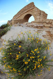 Ancient Roman aqueduct in Ceasarea. Flowers at old Ancient Roman aqueduct in Ceasarea at the coast of the Mediterranean Sea Stock Photos