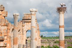 Ancient roman city in Morocco and stork nest Stock Photos