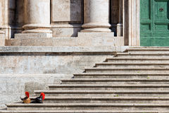 Ancient Roman Helmets on Steps Stock Image