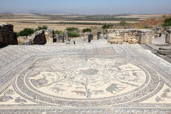 Ancient Roman mosaic in Volubilis Royalty Free Stock Photo
