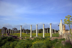 Ancient Roman site in Salamis. Roman archaeological site of ancient city of Salamis in Cyprus Stock Photos