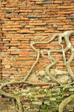 Ancient root tree Royalty Free Stock Photography