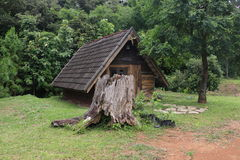 Ancient roots and cabin.Over a hundred years old Stock Photography