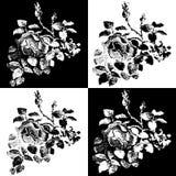 Ancient roses Royalty Free Stock Photo