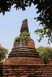 Ancient Round And Bell Shape Pagodas With Mango Leaf. Jujube and mango leaves with old stupa and bricks walls with clear blue sky historical park.  Ayutthaya stock photos