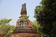 Ancient Round And Bell Shape Pagodas With Mango Leaf. Ruins. Jujube and mango leaves with old stupa and bricks walls with clear blue sky historical park stock image