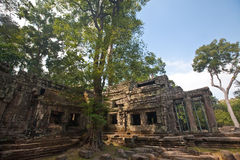 Ancient ruin of the Ta Phrom temple, Angkor Wat Cambodia Royalty Free Stock Photos