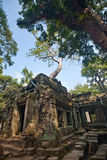 Ancient ruin of the Ta Phrom temple, Angkor Wat Cambodia Stock Image