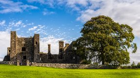 Ruins of old abbey and 3 birds landing on tower with large green tree on side and grass in foreground – front view stock photography