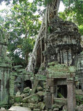 Ancient ruins of Beng Melia in the jungle, Cambodia. Stock Image