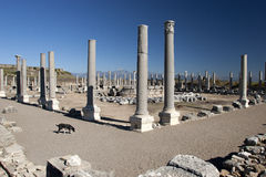 Ancient Ruins Perge Turkey Stock Images
