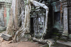 Ancient ruins and roots Stock Images