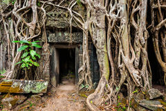 Ancient ruins of Ta Prohm temple, Angkor, Camb Stock Photography