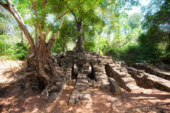 The ancient ruins and tree roots,of a historic Khmer temple in Stock Images