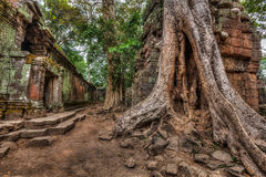 Ancient ruins and tree roots, Ta Prohm temple, Angkor, Cambodia Stock Photography