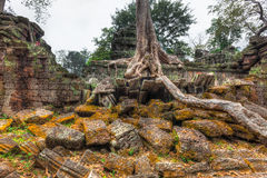 Ancient ruins and tree roots, Ta Prohm temple, Angkor, Cambodia Stock Images