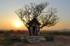Ancient ruins with tree silhouette at sunset Stock Photo