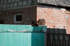 Ancient rustic cat Stock Images