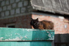 Ancient rustic cat Stock Photography