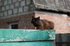 Ancient rustic cat Royalty Free Stock Photography