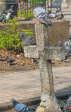 Ancient sepulchral cross. Pigeons use an ancient sepulchral cross as a perch Royalty Free Stock Photography