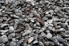 Ancient shellfish fossil Royalty Free Stock Photo