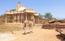Ancient shrine and donkey in this massive Archaeological Park co Royalty Free Stock Image