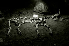 Ancient skeleton Royalty Free Stock Images