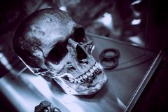 Ancient Skull on Display. Bluish Color Grading stock photography