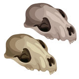 Ancient skull of a prehistoric animal. Vector Royalty Free Stock Photos