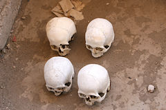 Ancient Skulls Stock Photography