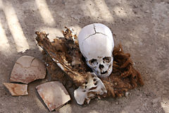 Ancient Skulls Stock Images