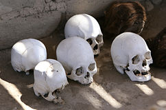 Ancient Skulls Royalty Free Stock Photos